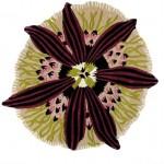 Ковер Botanica T04, 110см, Missoni Home