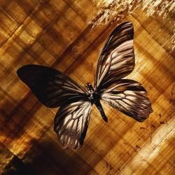 Художні стелі Метелики Butterfly 1