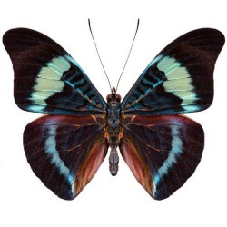 Художні стелі Метелики Butterfly 10