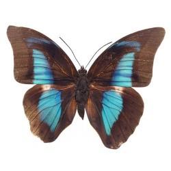 Художні стелі Метелики Butterfly 11