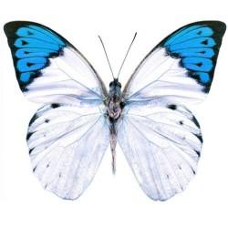 Художні стелі Метелики Butterfly 12