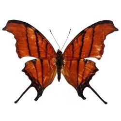 Художні стелі Метелики Butterfly 13