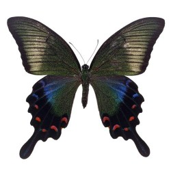 Художні стелі Метелики Butterfly 14