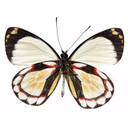 Художні стелі Метелики Butterfly 15
