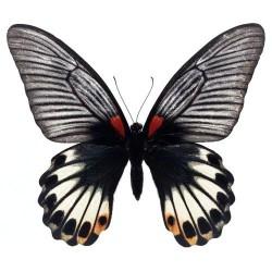 Художні стелі Метелики Butterfly 17