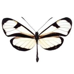 Художні стелі Метелики Butterfly 18