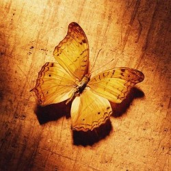 Художні стелі Метелики Butterfly 2