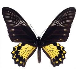 Художні стелі Метелики Butterfly 20
