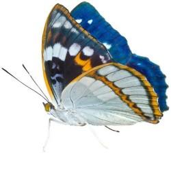 Художні стелі Метелики Butterfly 21