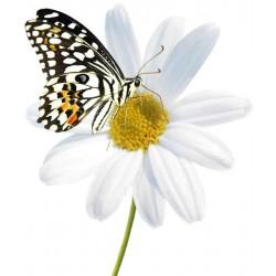 Художні стелі Метелики Butterfly 22