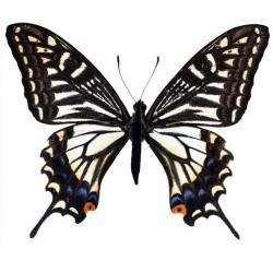 Художні стелі Метелики Butterfly 23
