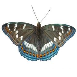 Художні стелі Метелики Butterfly 25