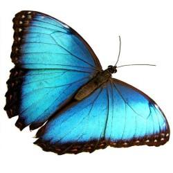 Художні стелі Метелики Butterfly 26
