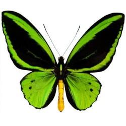 Художні стелі Метелики Butterfly 27