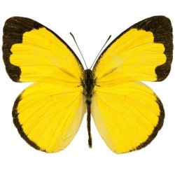 Художні стелі Метелики Butterfly 28