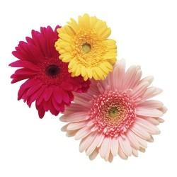 Художні стелі Квіти Flower 15