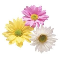 Художні стелі Квіти Flower 16