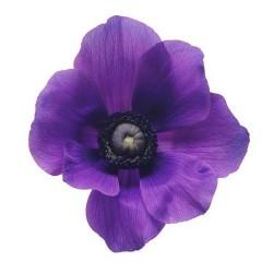 Художні стелі Квіти Flower 17