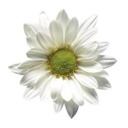 Художні стелі Квіти Flower 18
