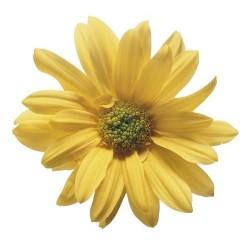 Художні стелі Квіти Flower 20