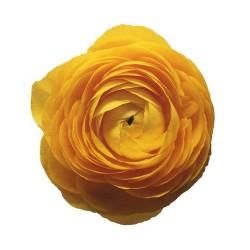 Художні стелі Квіти Flower 23