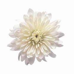 Художні стелі Квіти Flower 24
