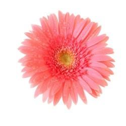 Художні стелі Квіти Flower 29