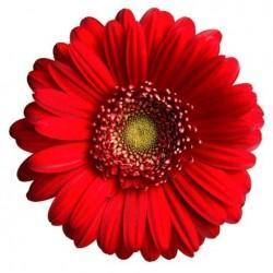 Художні стелі Квіти Flower 30