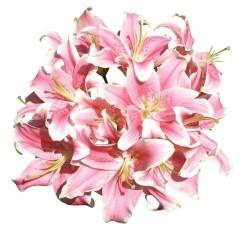 Художні стелі Квіти Flower 31