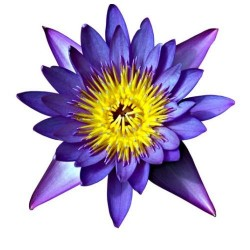 Художні стелі Квіти Flower 32