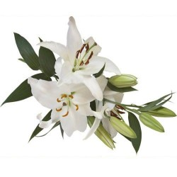 Художні стелі Квіти Flower 36
